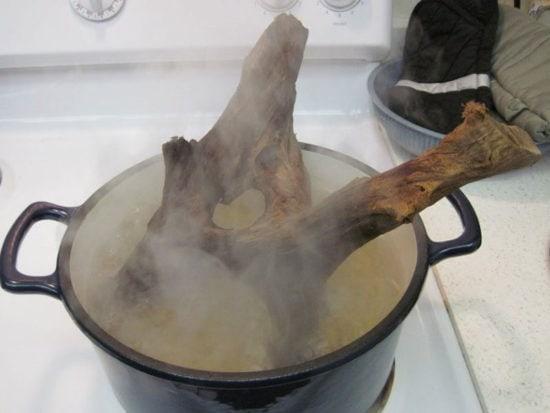 Boil Driftwood
