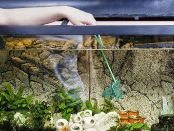 How to Clean Aquarium