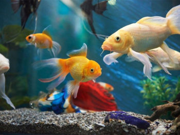 How To Soften Aquarium Water Effectively